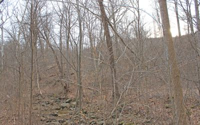 53.4 Acres  & 54.4 Acres SR 772 Pike Co