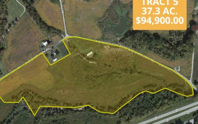 37.3 Acres Chenoweth Fork Pike County