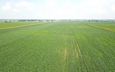 236 Acres Madison County Grain Farm