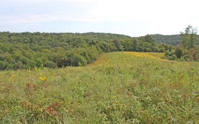 82 Acres Disterdick Road, Scioto County