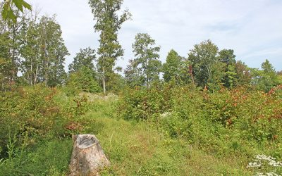 16 Acres Disterdick Road, Scioto County