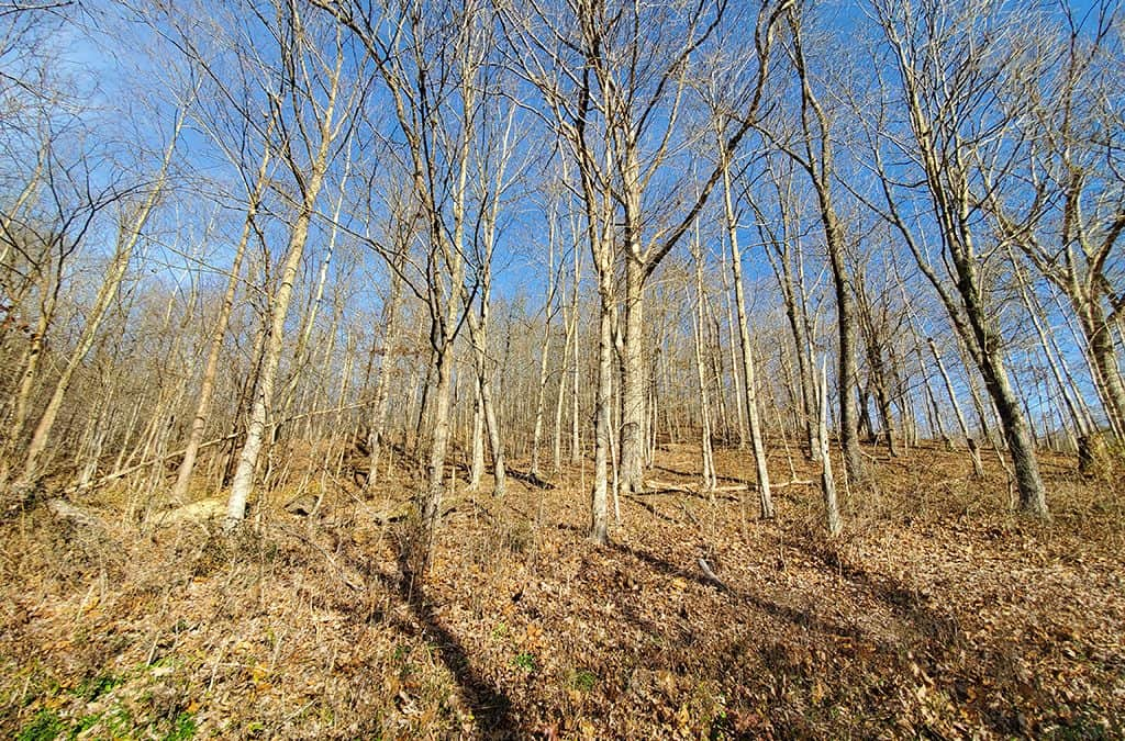 61.5 Acres Pike County